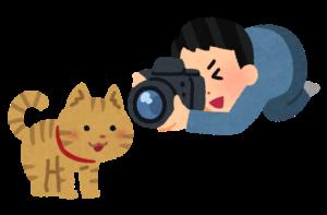猫を撮る人