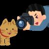 猫を撮影するカメラマン