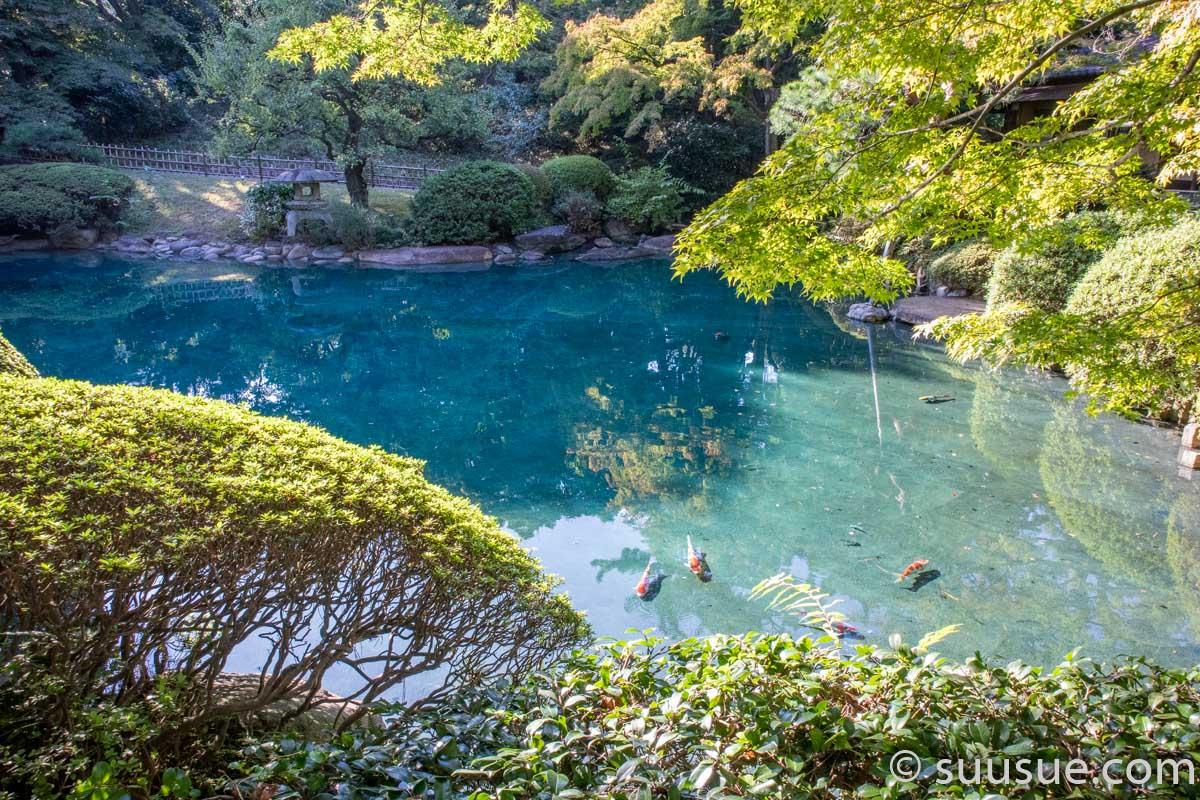 日本庭園の池と鯉