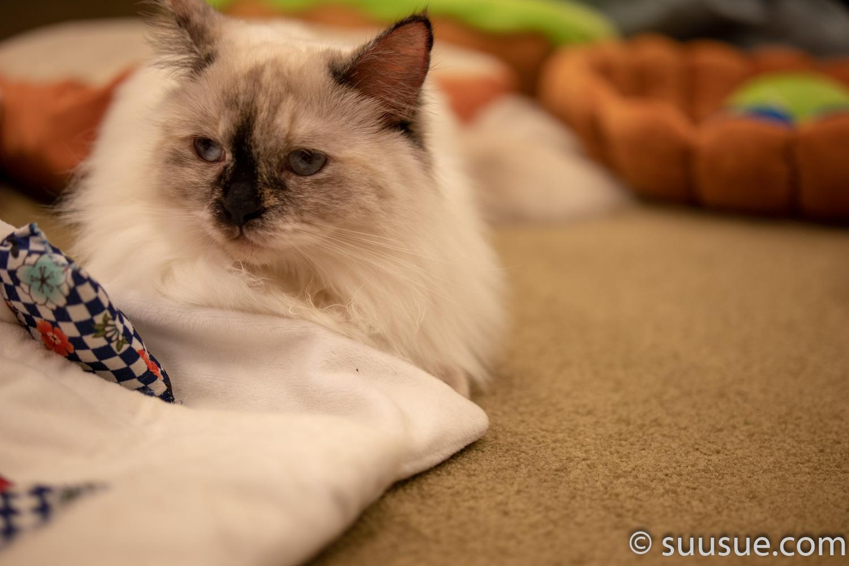 僕と猫。秋葉原店