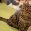 EOS kiss MとEF-M32mm F1.4 STMで猫を撮影!猫カフェ「僕と猫。秋葉原店」に潜入!