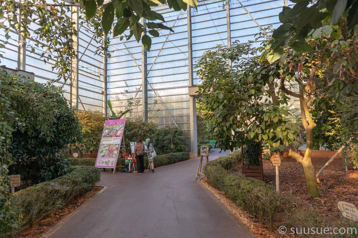 おきなわワールド 熱帯フルーツ園