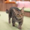 猫カフェの猫をα7RIIIの動物瞳AFでテスト撮影(レビュー)