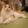 猫カフェでのミラーレスカメラ3台の撮り比べ(α7RIII、EOS kiss M、GX7MK2)