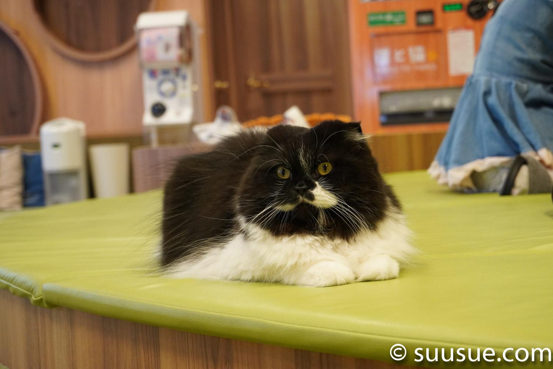 フィガロ 僕と猫。秋葉原店