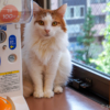 猫写真をキレイに撮る撮影方法のコツ