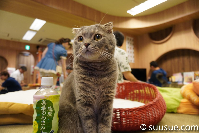 カワウソ 僕と猫。秋葉原店