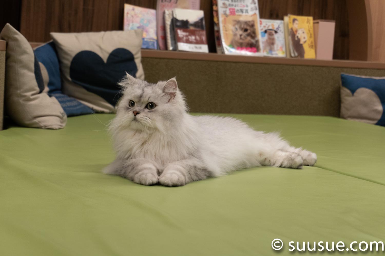 ルイ 僕と猫。秋葉原店