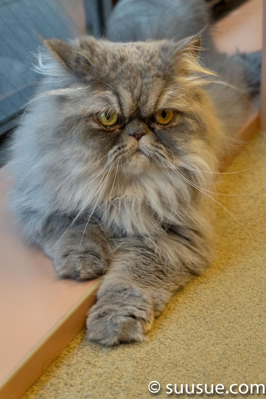 ふぁーびー 僕と猫。秋葉原店