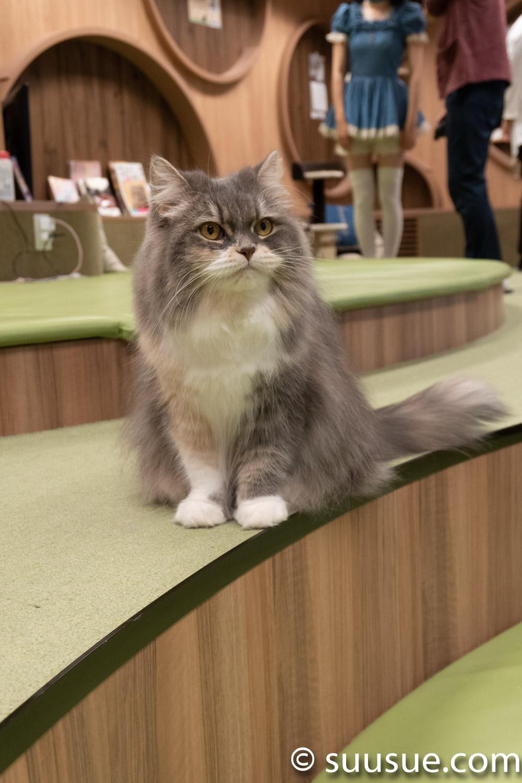 もっちゃん 僕と猫。秋葉原店