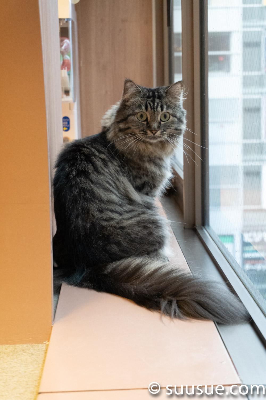 パピコ 僕と猫。秋葉原店