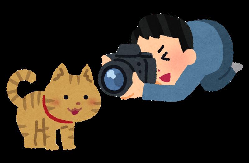 猫を撮る男性